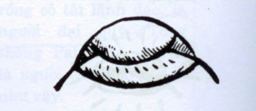 miệng ống bể