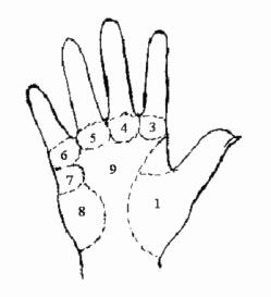 Hướng dẫn xem bói chỉ tay gò của lòng bàn tay