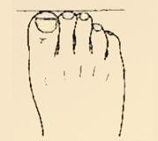 độ dài ngón chân tiết lộ tính cách